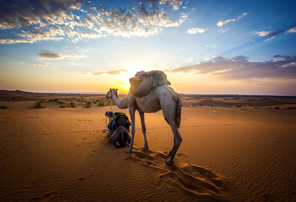 camel-at-desert-of-merzouga-best-trip