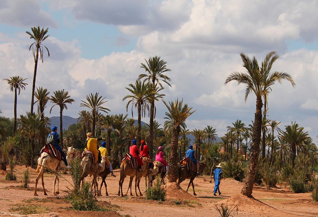 Camel-ride-in-the-Palmeraie-to-experience-the-camel-trekking