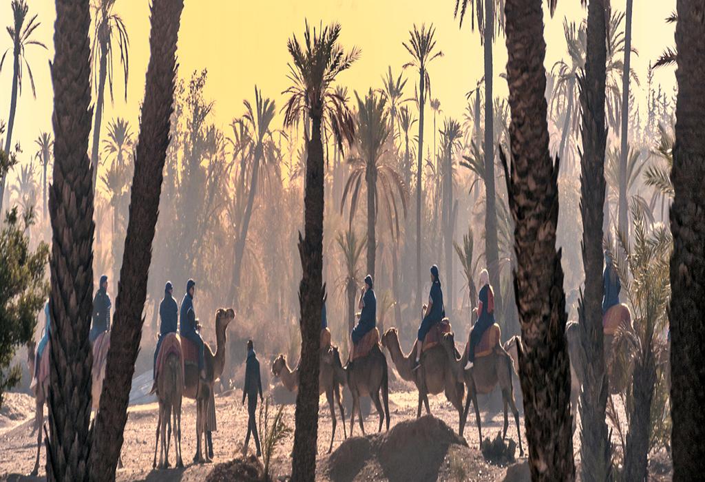 Morocco-Camel-Trekking-marrakech-half-day-trip
