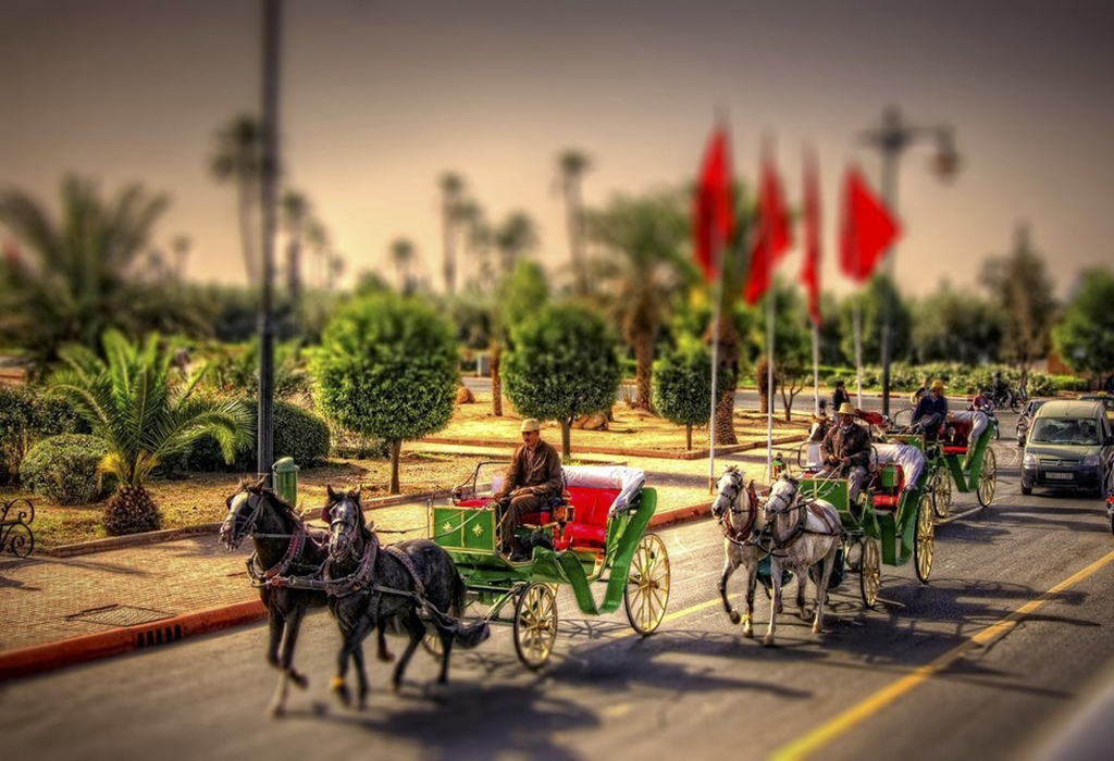 caleche-tour-at-marrakech